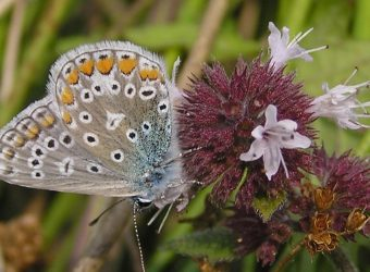 Vlinder- en Libellenexcursie