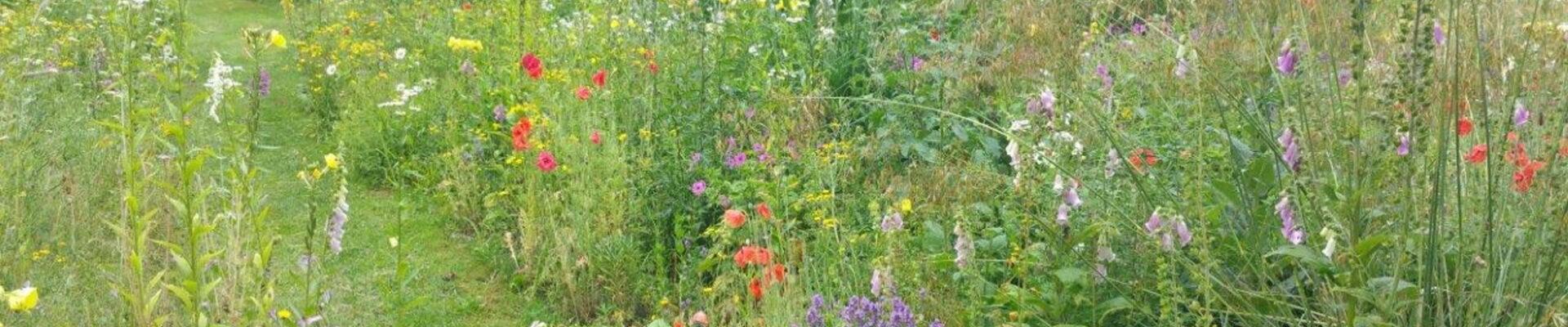 Subsidie provincie Drenthe voor groene bewonersinitiatieven voor bijen en vlinders