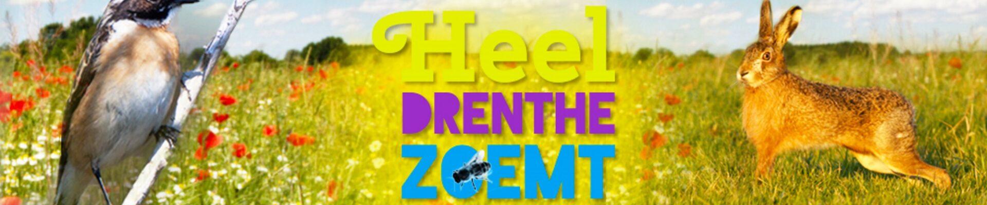 Project Bermscouts! Drenthe