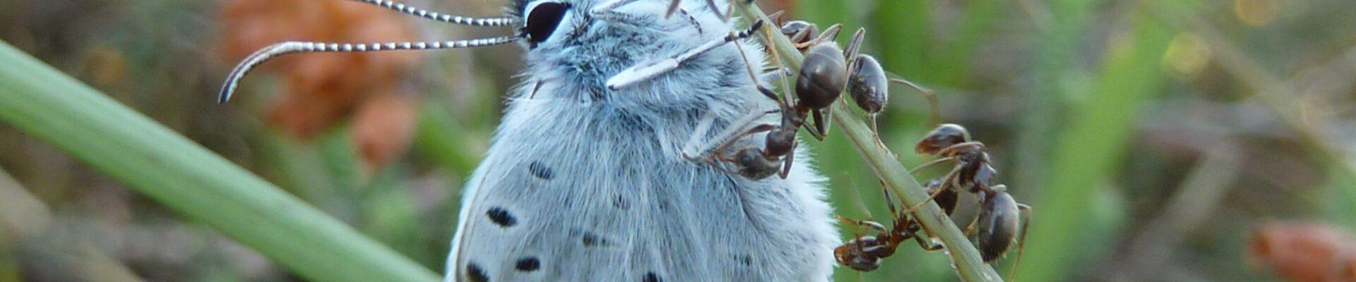 Dagvlinders en Libellen Drentsche Aa-gebied